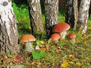 Может ли быть аллергия на грибы: возможные симптомы и лечение